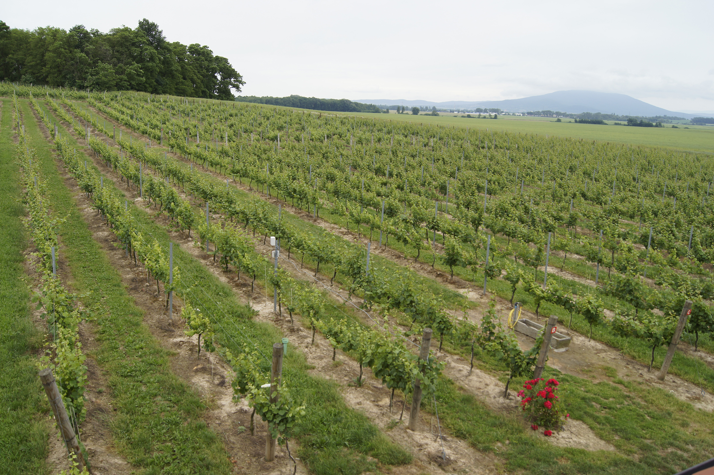 Weingut Adoria, Polen, Foto: Klaus Klöppel