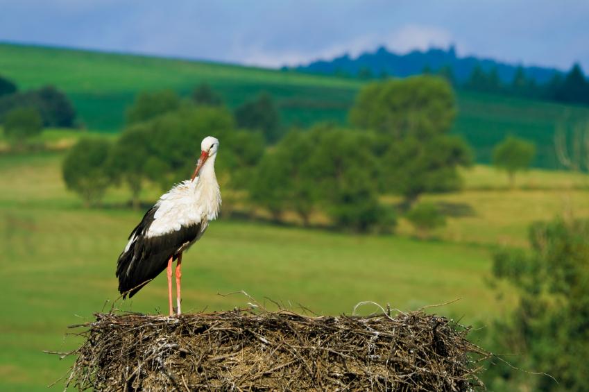 Immobilien sind gefragt im Storchenland und Naturrparadies PolImmobilien sind gefragt im Naturparadies Polen, Foto: © iStock.com/tmeks