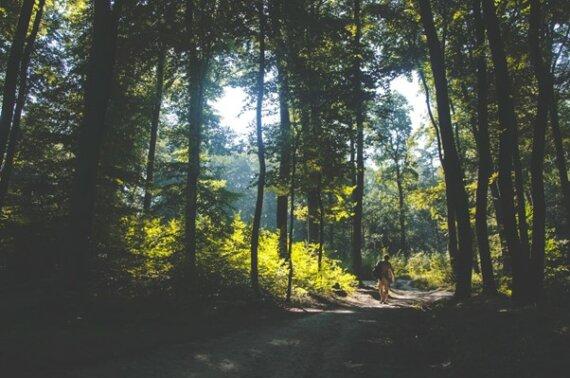 Wildcampen Polen